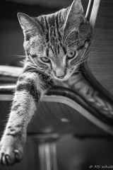 """Tales from the swivel stool...Lazy  """"can't get movin' """" Marley"""