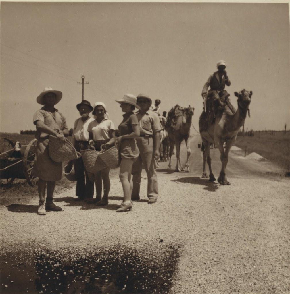 11. 3 июля. Еврейские рабочие чинят дорогу в Газу