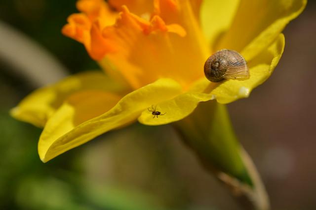 Snail & Spider