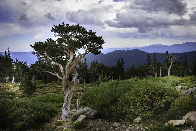 Nature view near road Mt. Evans - Colorado - USA