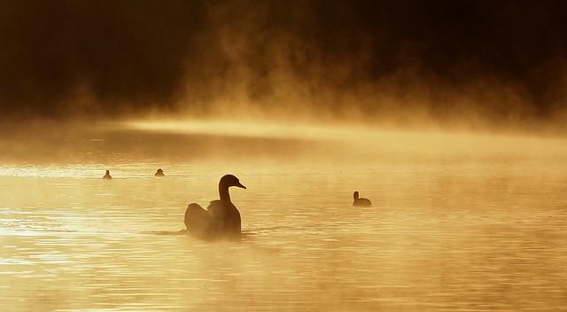 Sun breaking through the mist on Overton Lake. 3/10/2019