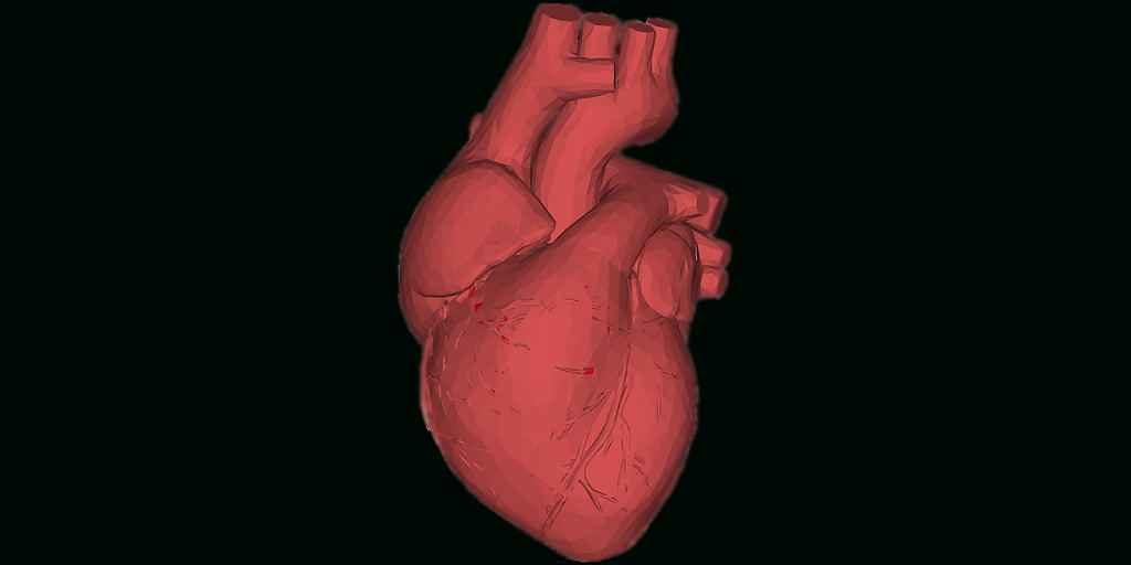 médicament-pour-prévenir-les-cicatrices-cardiaques