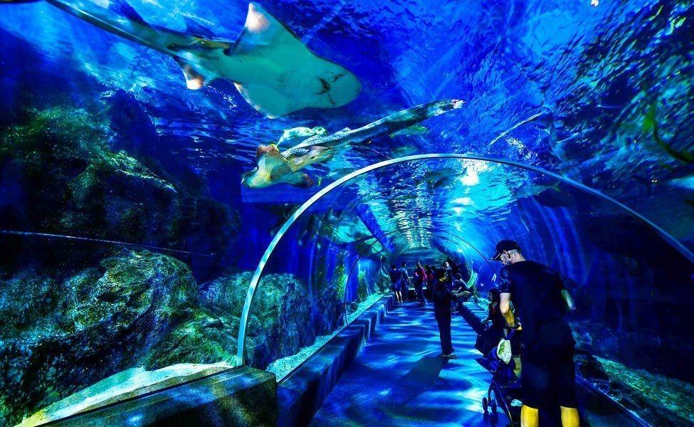 พิพิธภัณฑ์สัตว์น้ำ ในห้างสรรพสินค้าสยามพารากอน
