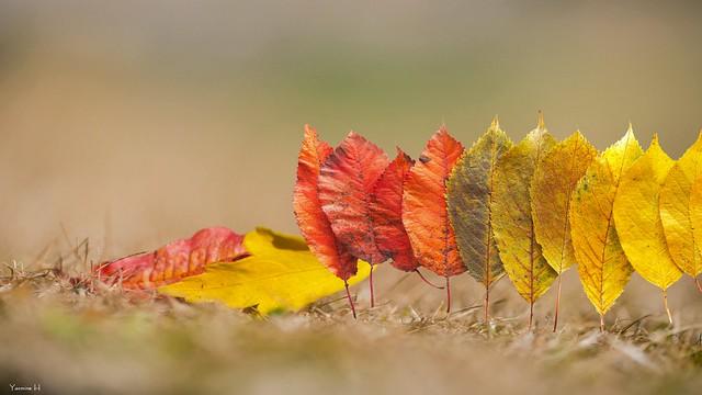 #Autumn HSS - 7507