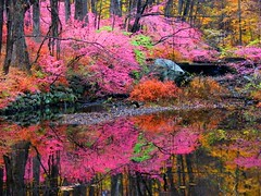 Pink Fall Reflection
