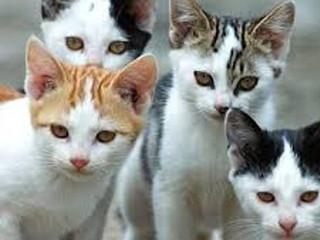 colonie gatti