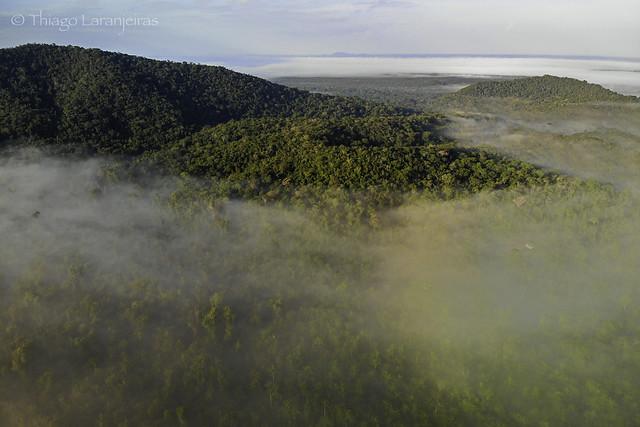 Serra do Viruá, floresta e neblina