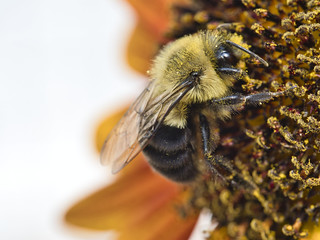 I Believe in Bees | by TaoStory