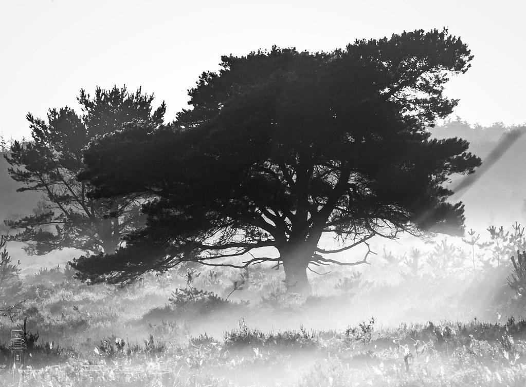 Morning Haze NP Dwingelerveld (NL)