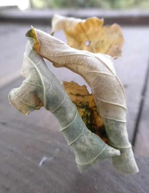 Herbstblatt - Voll auf die Nase