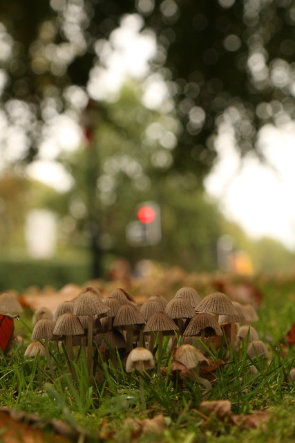 Shrooms In The City