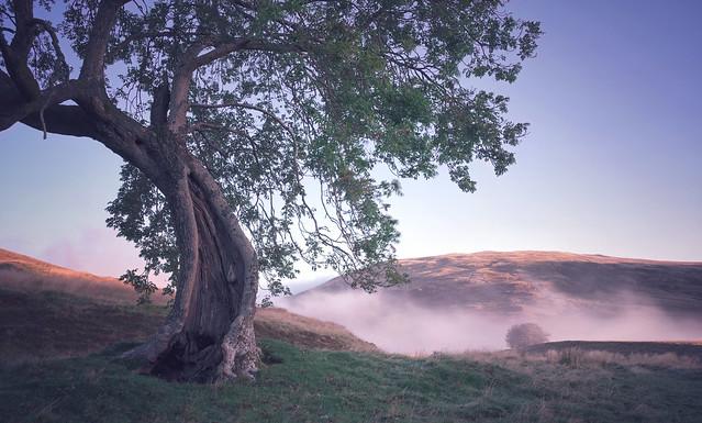 Frandy Tree before Dawn