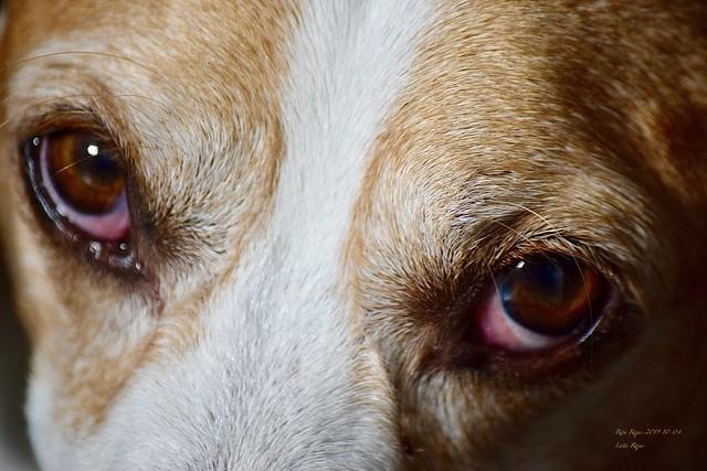 2019-10-04    -    Eye's    -   Can Eyes talk   ??