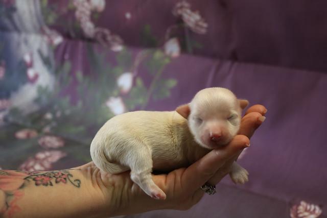 1 Casanova 5.6oz 5 days old (2)