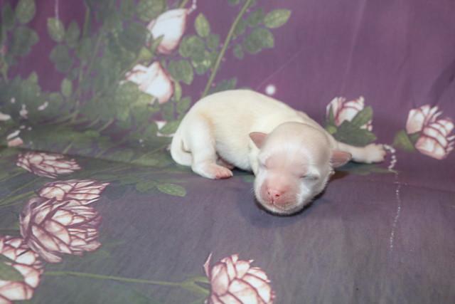 1 Dreamy 6.7oz 5 days old (11)
