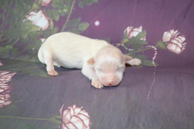 1 Bambino 5.1oz 5 days old (12)