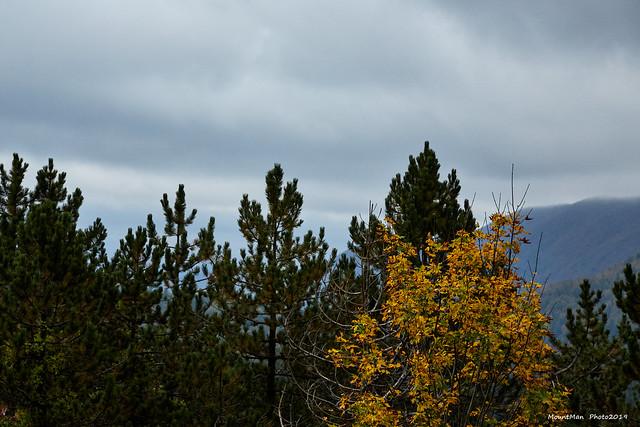Dolazak jeseni (2)