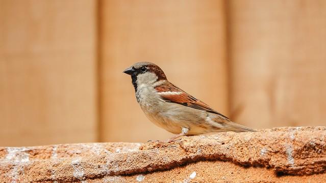 Bird - 7509