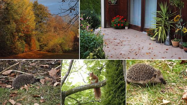 Herbst zieht  ein