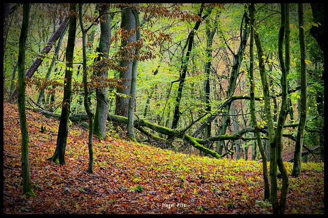 Herbstgefühl