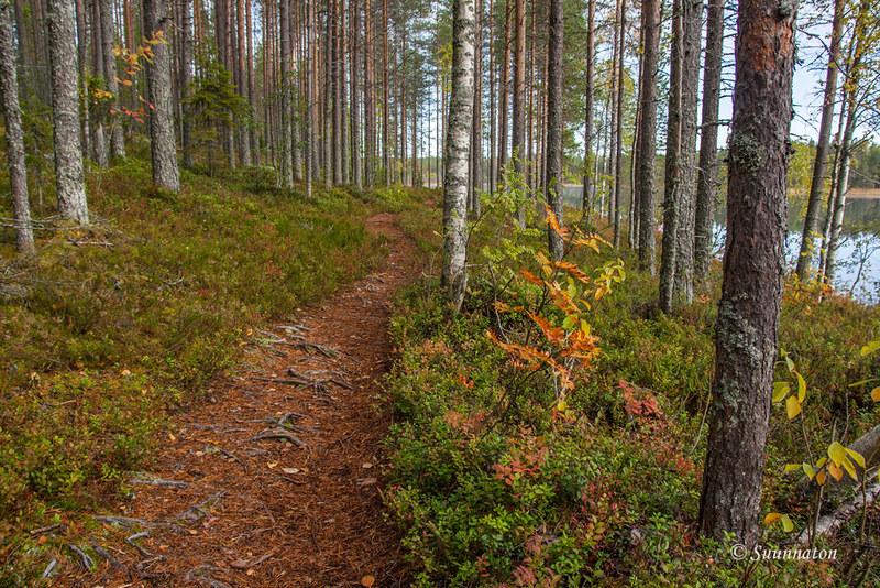 Tiilikkajärven kansallispuisto (25)