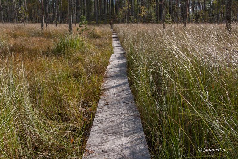 Tiilikkajärven kansallispuisto (16)