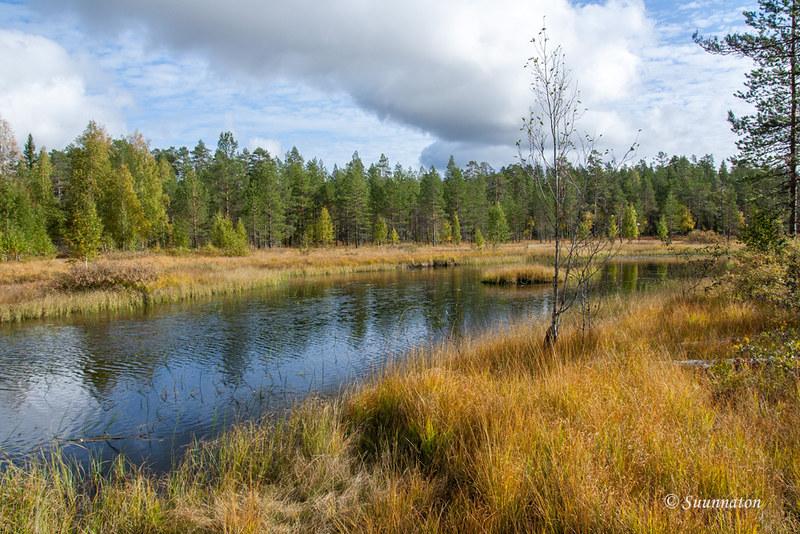 Tiilikkajärven kansallispuisto (9)