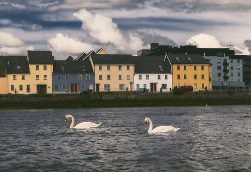 emeraldisle ireland northernireland acrossthepond fineartphotography landscape photography galway galwaybay swans nature countygalway seascape waterfront