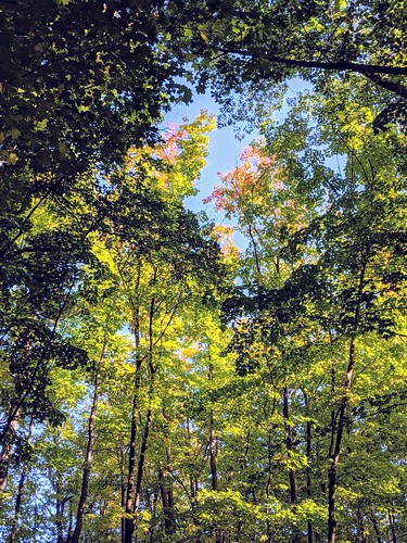 Early fall trees with heart-shaped patch of blue morning sky