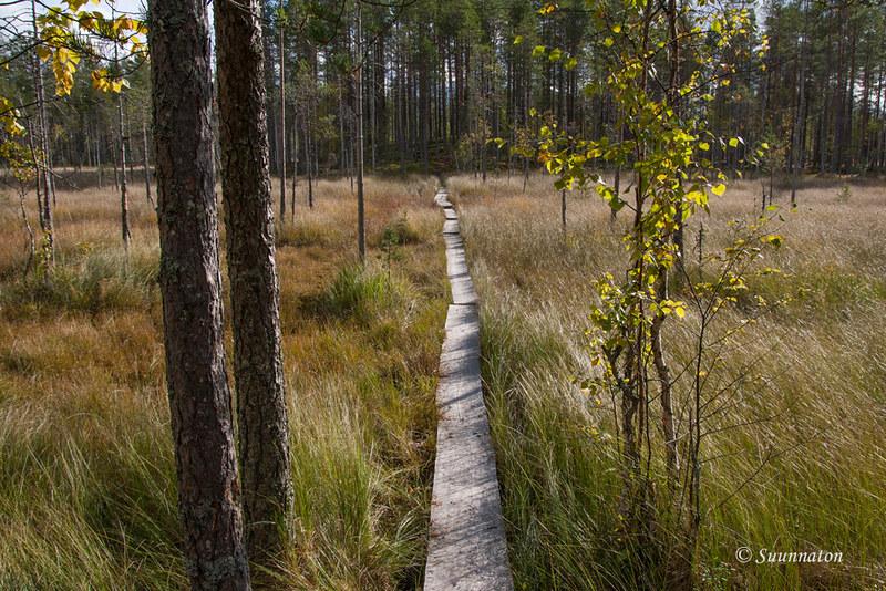 Tiilikkajärven kansallispuisto (15)