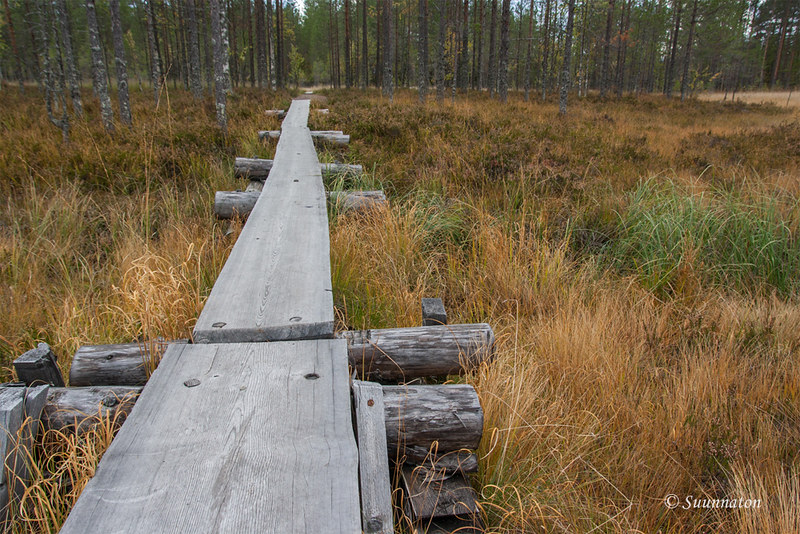 Tiilikkajärven kansallispuisto (21)