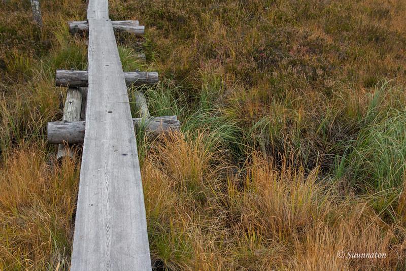 Tiilikkajärven kansallispuisto (20)