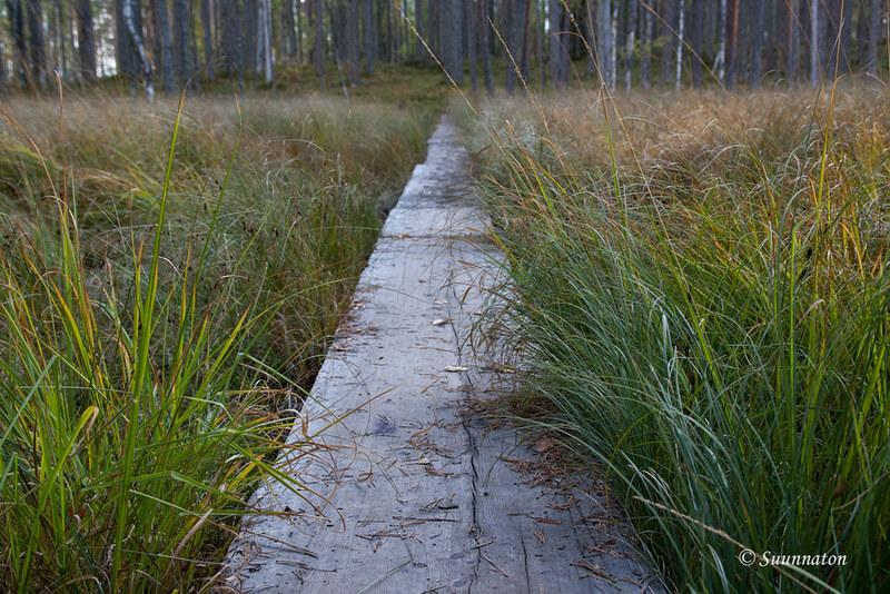 Tiilikkajärven kansallispuisto (13)
