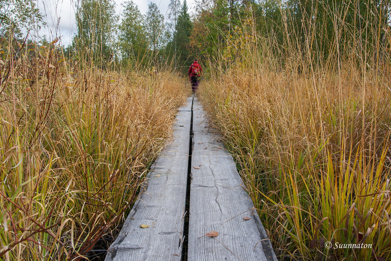 Tiilikkajärven kansallispuisto (10)