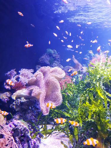倫敦水族館