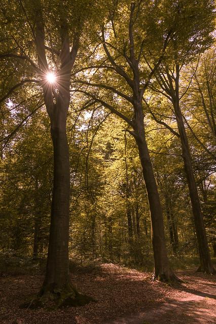 Beloeil Forest