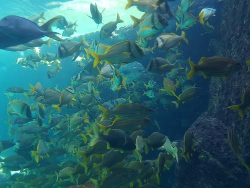 Atlantis, Nassau. Bahamas.
