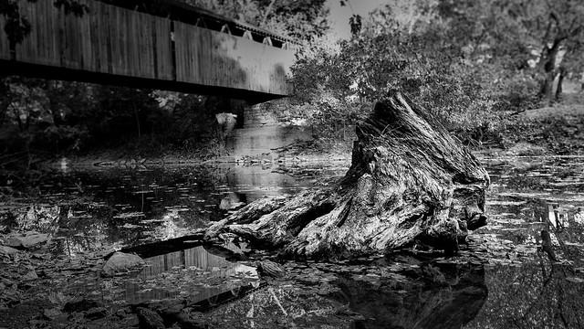 Tree Stump at Switzer Covered Bridge