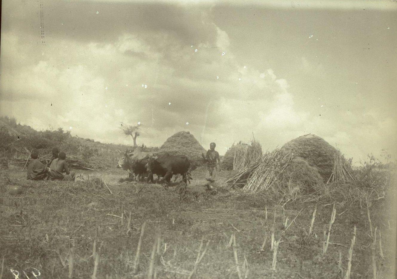 218. 1899. Абиссиния. Гильдесса. Близ Беляуа