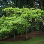 Hoyt Arboretum in Portland, Oregon