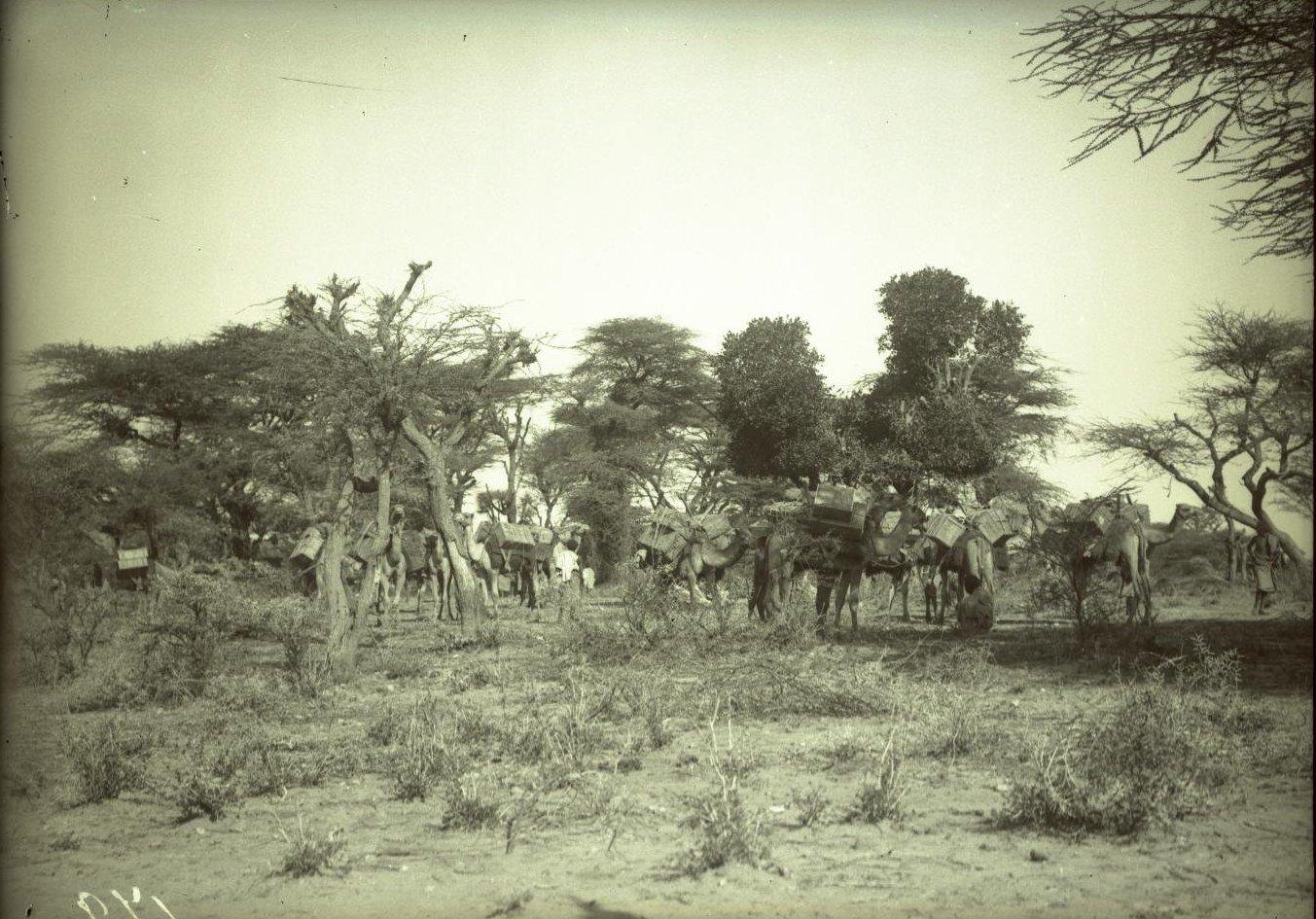 179. 1899. Абиссиния. Гильдесса. Наш бивуак