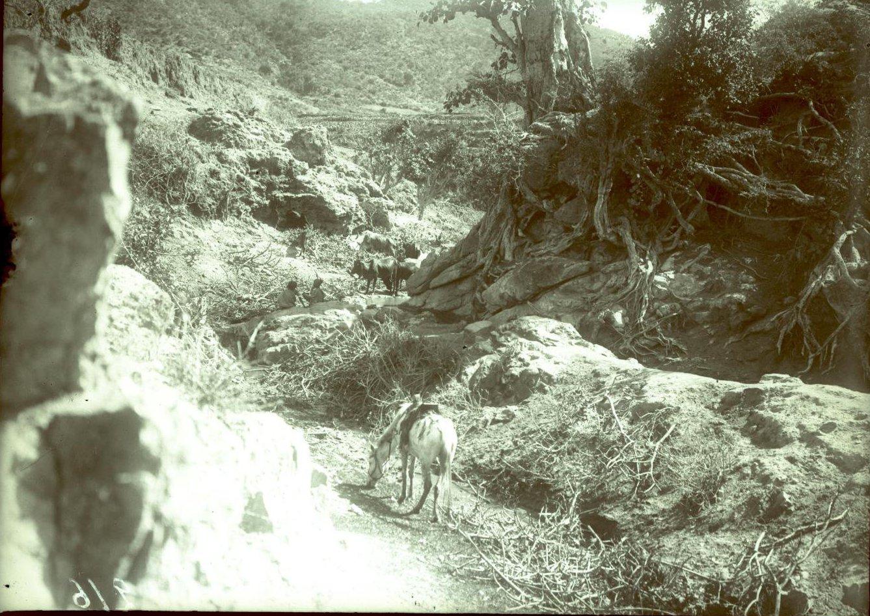 216. 1899. Абиссиния. Гильдесса. Близ Беляуа