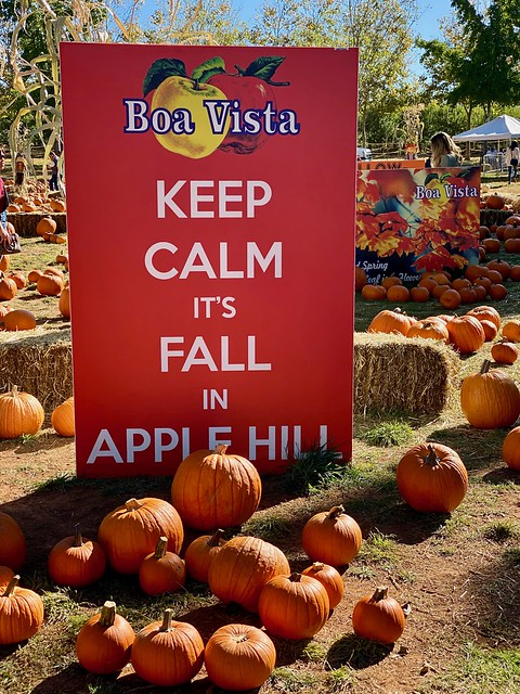 Boa Vista pumpkin patch