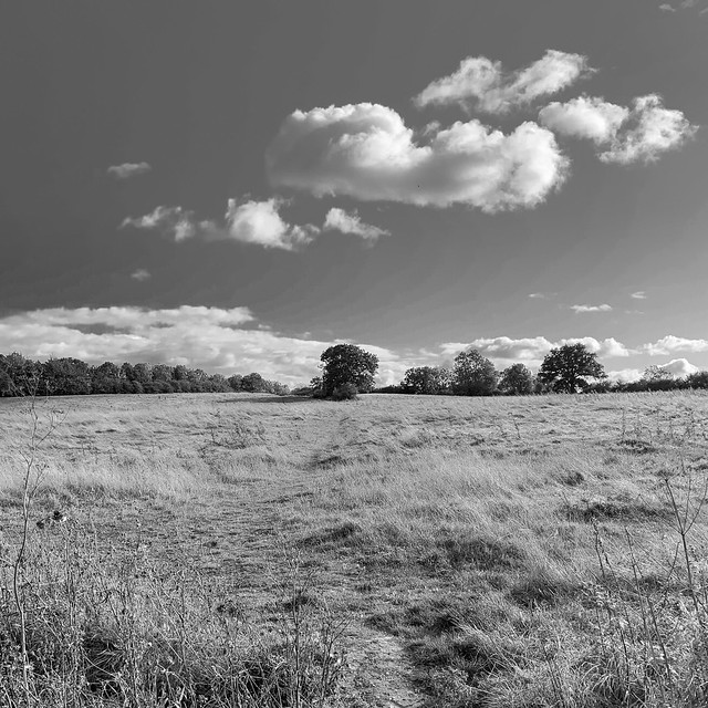 Walking across the fields