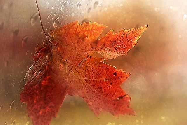 Leaf in fall. A Slider:-)