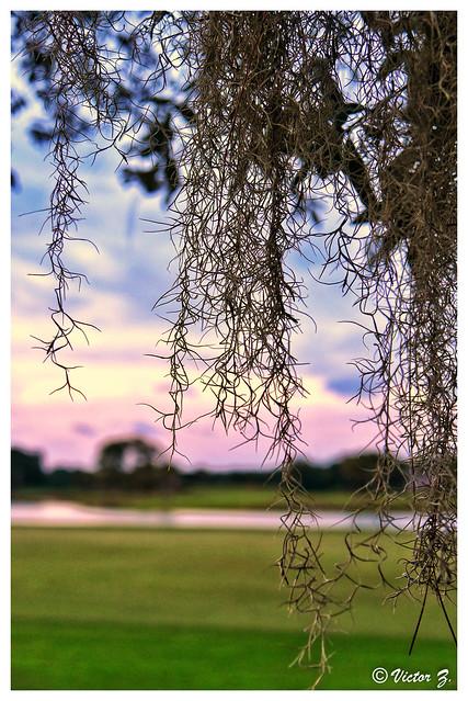 Heathrow Lake Mary Florida -33