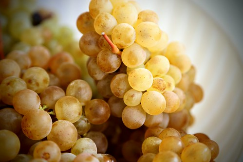 Valley grapes