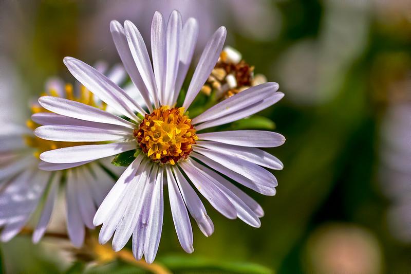 Wild-Flower-29-7D1-091919