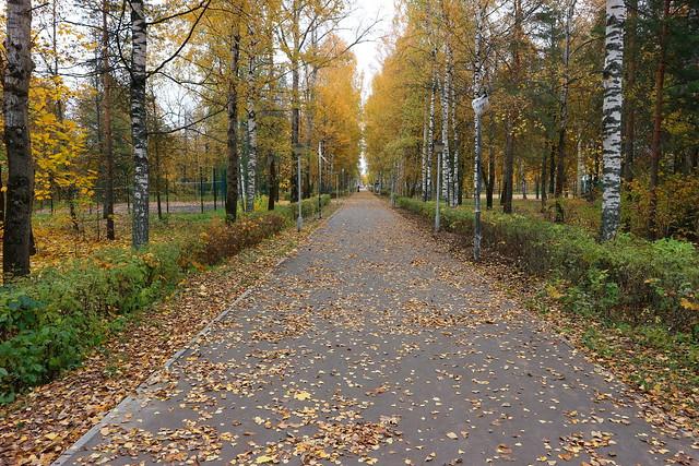 Парк в левобережной части города Дубна.