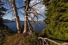 Crater Lake Trees at the Rim
